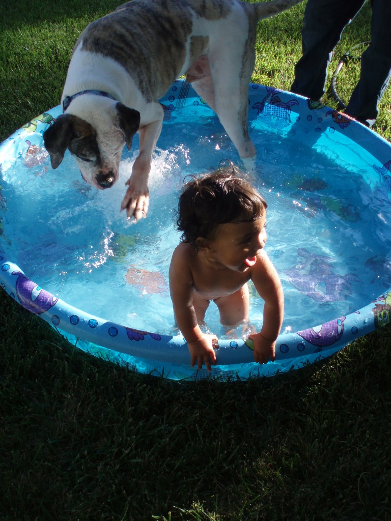 Bliss is your dog and a pool on a hot summer's day!