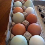 Eggs: Power Protein for Pregnancy and Beyond