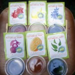 Giveaway: GLOB Botanical Paint Kit  $24 ARV CLOSED